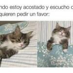 Imagenes chistosas de gatos