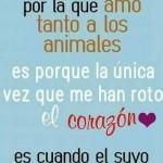 Imagenes con frases de amor a los animales