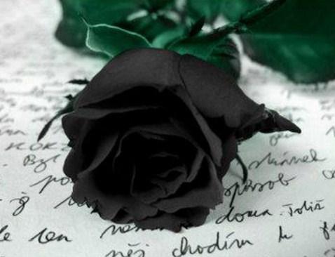 Rosas para duelo