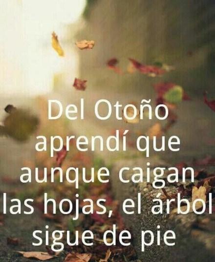 Imagenes Con Frases Bienvenido Otoño
