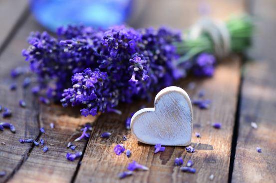 fotos de flores de lavanda y corazones