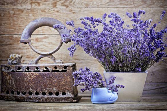 fotos de flores de lavanda