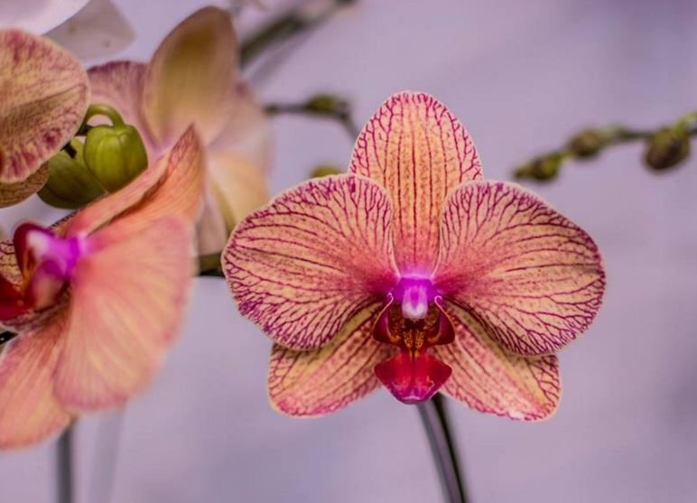 imagenes de orquideas exoticas