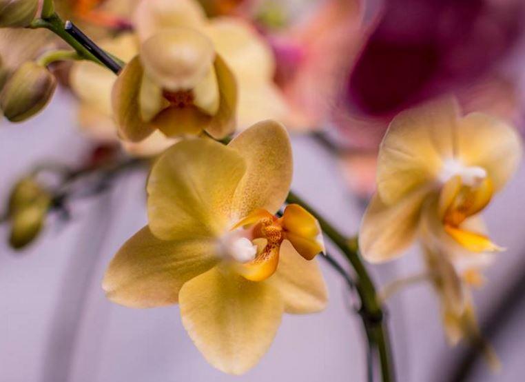 imagenes de orquideas y sus nombres