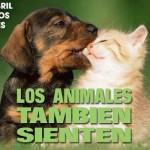 Imagenes dia del animal para Facebook