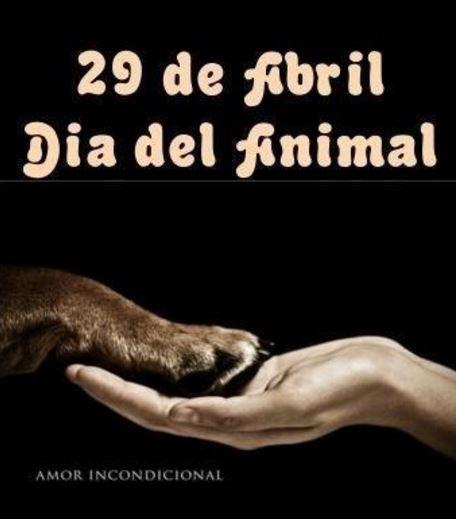 imagenes dia del animal