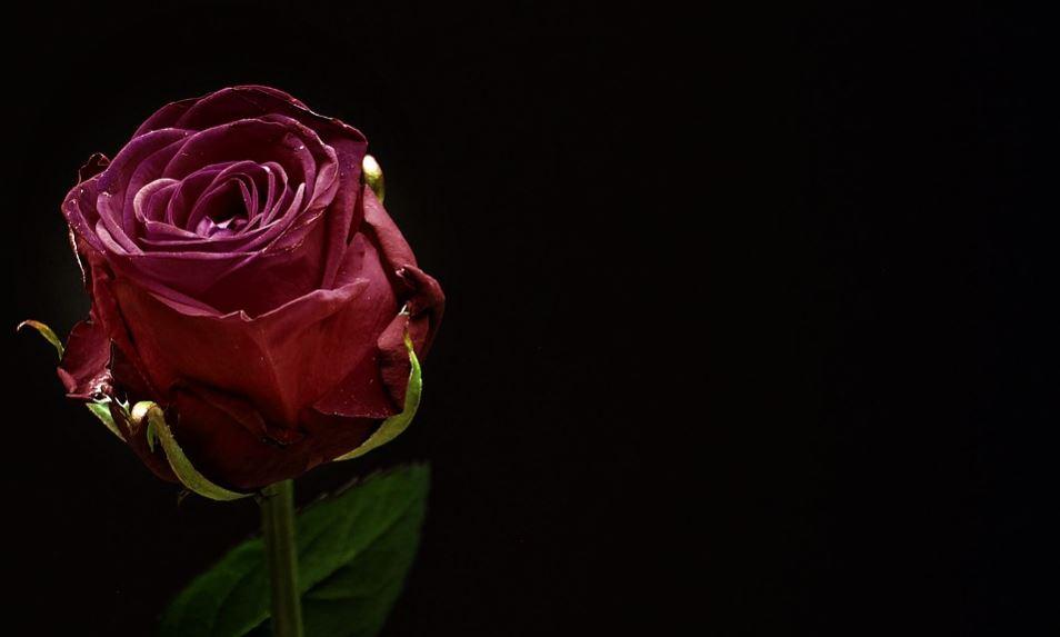rosas de luto para whatsapp