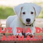 Imagenes alusivas al dia del animal