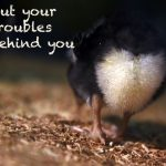 Frases de problemas