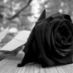 Rosas negras de luto