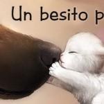 Imagenes del dia internacional del beso