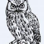 Imagenes de lechuzas para dibujar